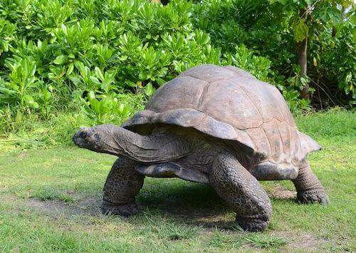 Seychelles animal